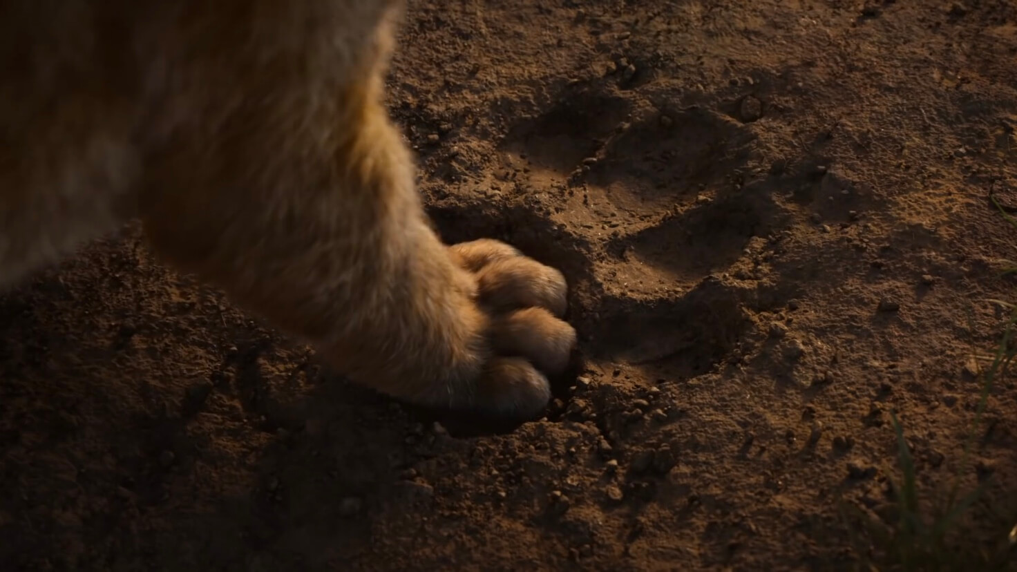 Simbas's foot in Mufasa's footprint.