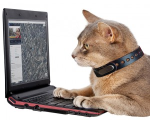 Never lose your cat again, with HERE Kitty