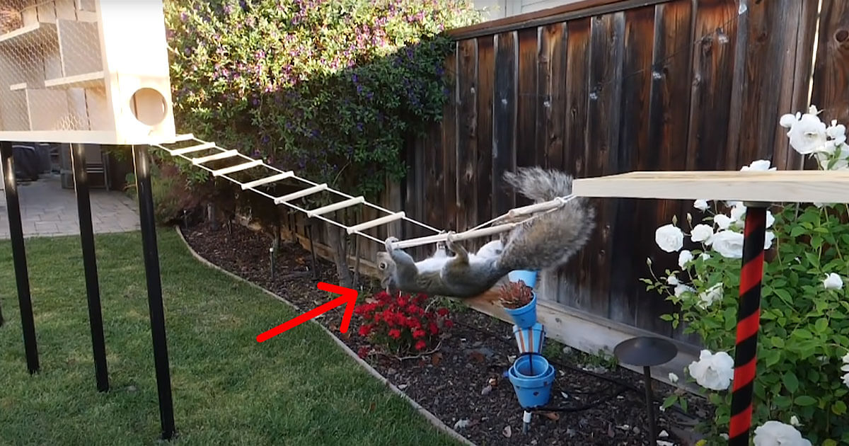 This Squirrel Proof Bird Feeder Video is the Best Thing You'll See Today